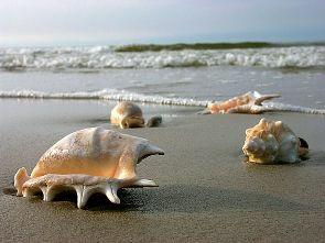 Spiaggia costa Toscana