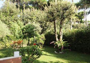 Villa Dalmazia : Сад