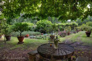 Villa Massaciuccoli : Outside view