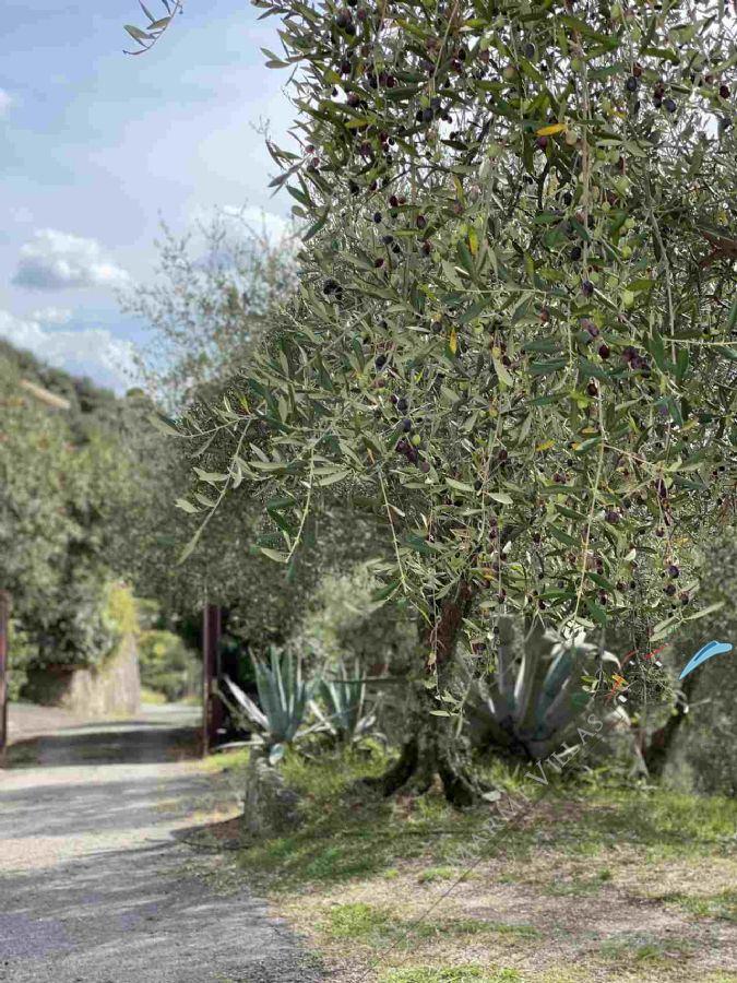 Villa Lucia Villa singola  in vendita  Camaiore