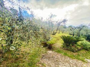Podere Le Capannelle : Outside view