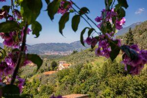Villa Charme Toscana vista mare  : Terrazza panoramica