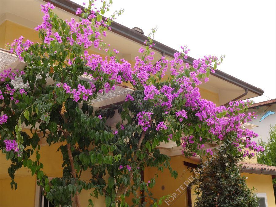 Villa  Amarcord : Outside view