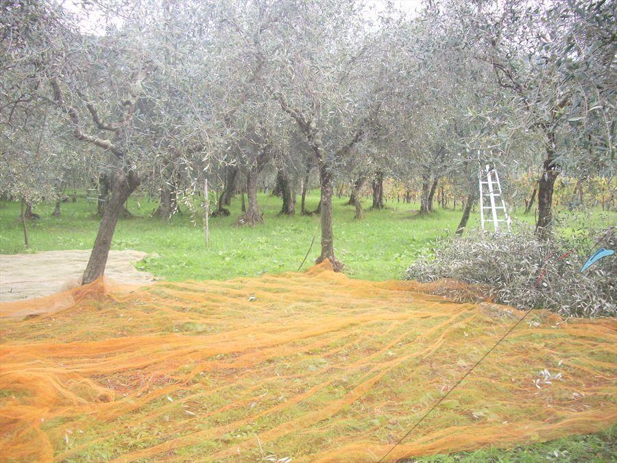 Villa Vigneto Camaiore  : Территория