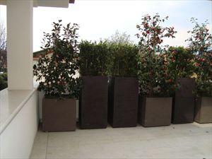 Bifamiliare Nettuno : Terrace