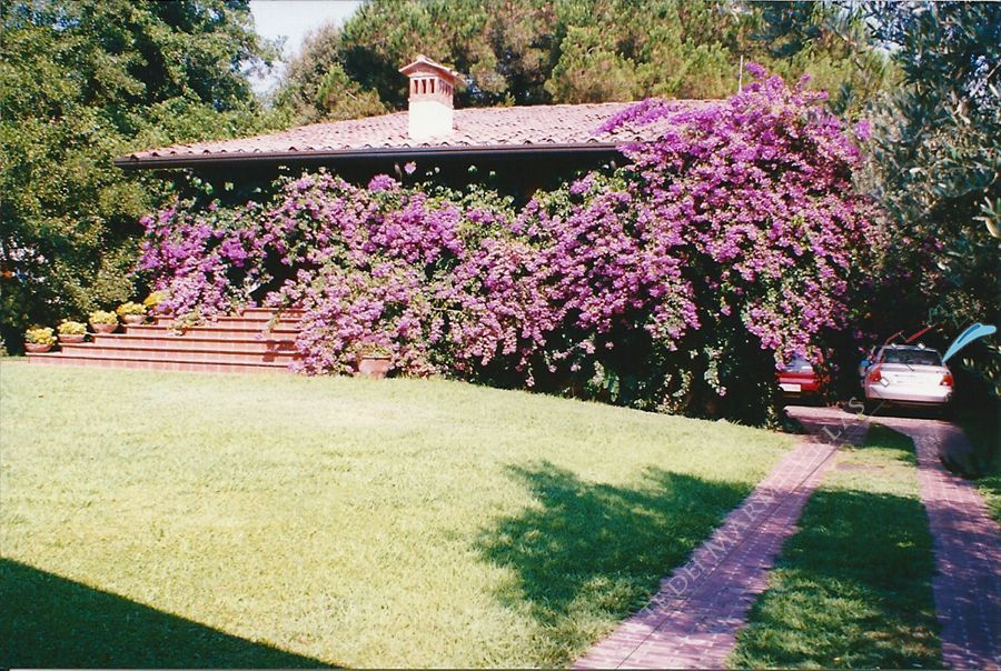 Villa Bouganville - Detached villa Forte dei Marmi